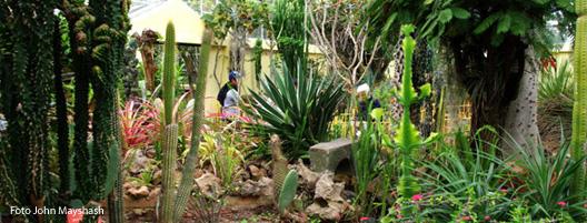 Verde cronopio revista cronopio ideas libres y diversas for Actividades jardin botanico bogota