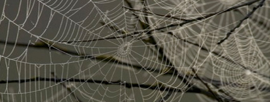 La tela de la arana